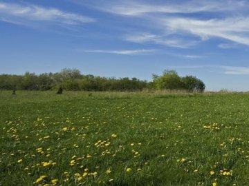 Как приватизировать землю под домом
