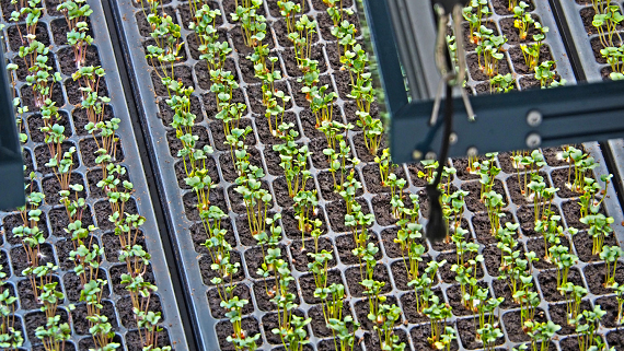 Вертикальные фермы Bowery Farming