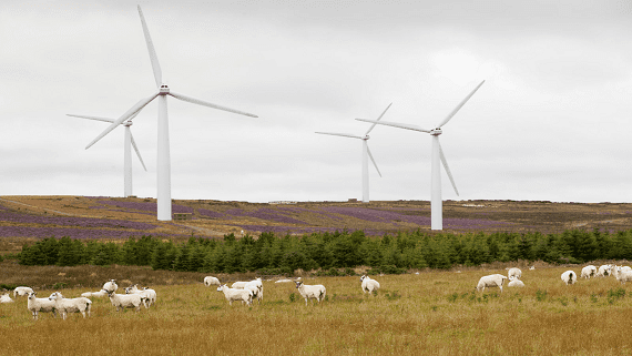 Ветровые электростанции Шотландии произвели в двое больше необходимого количества энергии
