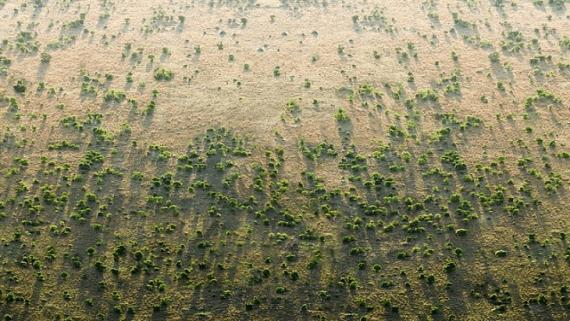В Африці висаджують величезну зелену стіну що б перешкодити розширенню пустелі Сахари
