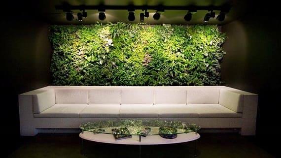 Зелёные стены (Фитостены)